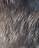 Macro Wool Elk