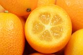 Kumquat close up background
