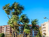 stock photo of hurricane wind  - Wind photography on palm trees in one day in hurricane - JPG
