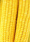 Crude corns close-up