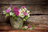 pic of red clover  - White and red clover on a rustic background - JPG