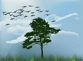 illustration with single tree under flying swans