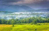 picture of cade  - Fog at sunrise at Cade - JPG