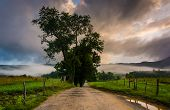image of cade  - Tree along a dirt road on a foggy morning at Cade - JPG