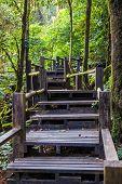 Ang Ka Nature Trail At Doi Inthanon National Park
