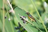 Beautiful Sunbird And Flower