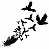 Feather Of Bird Vector Illustration Sketch
