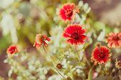 Red flowers in a summer garden