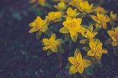 Yellow Flowers In The Summer Garden
