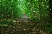 The path through the forest.