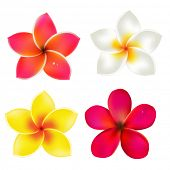 pic of frangipani  - Color Frangipanis Set - JPG