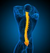picture of spine  - 3d render medical illustration of the human spine  - JPG