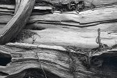Old Trunk Detail In Black And White. Canada