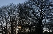 Sunset in English woodland.