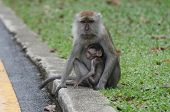 Monkey protecting a baby