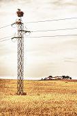 Pylons Full Of Stork Nests
