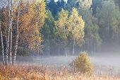 Autumn landscape with fog and a sunrise