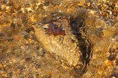 leaf on rock in flowing stream