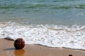 Coconut on the beach