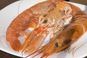 stock photo of crustaceans  - typical crustaceans of the mediterranean sea - JPG