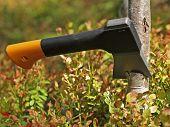 Small tourist hatchet cuts birch tree poster