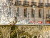 Pigeon On The Fountain