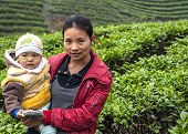 Young Mother With Child In Tea Plantation.
