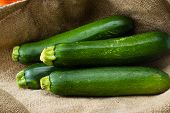 pic of grown up  - close up of fresh zucchini or green squash with a burlap sac as a background - JPG