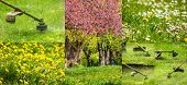picture of grass-cutter  - collage images work in garden and dandelion and chamomile lawn with gasoline trimmer cutting fresh green grass - JPG