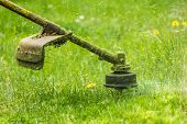 stock photo of grass-cutter  - close up shot of gasoline trimmer head with nylon line cutting fresh green grass to small pieces - JPG