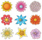 foto of edelweiss  - Isolated cartoon hand drawn flowers of different kinds no gradients - JPG