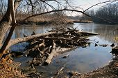 stock photo of illinois  - Fallen branches that have accumulated in a pile in the Du Page River at the Hammel Forest Preserve in Shorewood - JPG