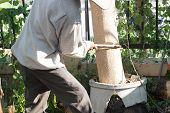 pic of cutting trees  - gardener cut the Horse Radish Tree in the garden - JPG