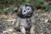 pic of tilt  - A cute and curious puppy is looking curious as he sits outdoors and tilts his head - JPG