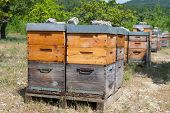 picture of bee-hive  - Many bee hives outdoor in orchard - JPG
