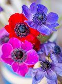 foto of dainty  - Stunning Anemone flowers red - JPG