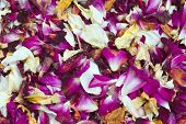 Pot Pourri Of Rose Petals
