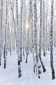 Winter serenity - a day in the winter forest