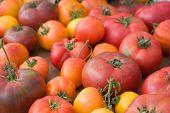organische Heirloom Tomatoes - engen DOF