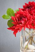red dahlia flowers in a vase