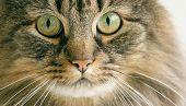 Cat close-up head