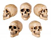synthetic skull many angle view on white with clipping path