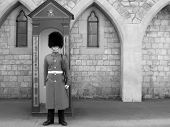 Black and white of Royal Guard at Windsor Castle (England).