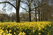 St. James Park in the spring, London