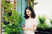 Cute Asian Woman Gardener Cutting Plants With Garden Scissors In Greenhouse poster