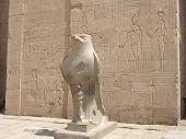 Falcon Statue At Edfu Temple, Egypt