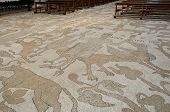 Mosaic Floor In Otranto Cathedral