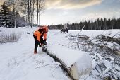lumberjack, forest-worker in action, winter and snowy landscape