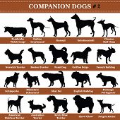 Set Of 20 Companion Dogs. Vector Set Of Companion Breeds Dogs Standing In Profile. Isolated Dogs Bre poster