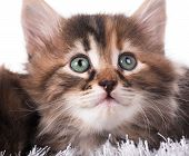 Cute Kitten In A Warm Knitted Sweater Over Light Blue Background poster